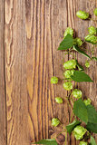 Hop plant on a wooden table