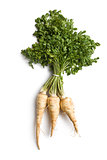 fresh parsnip