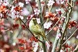 Beautiful flirty female sparrow