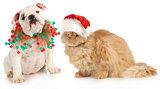 christmas pets