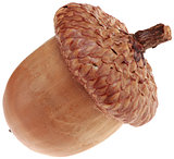 One Acorn Cutout