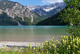 Plansee summer landscape (Austria).