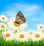 Nature background with spring daisy flower and butterfly. Vector illustration