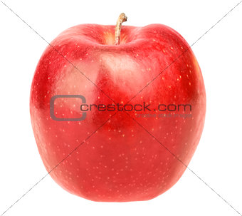Single fresh red apple