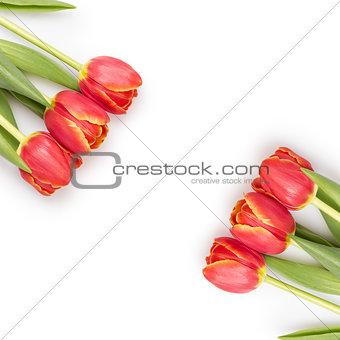 beautiful tulips template