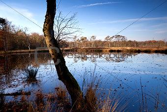old tree on swamp