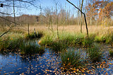 swamp in autumn