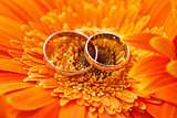 Two gold wedding rings on a background orange gerbera
