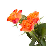 three orange rose