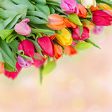 spring multicolored tulips bouquet