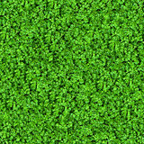 Green Meadow Grass. Seamless Texture.