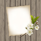 Blank paper with blossoming cherry branch on wooden background.