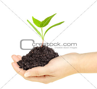 Green plant with dirt in a hand