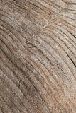 Wood Grain Texture Background.