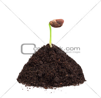 Green plant in a mound of ground