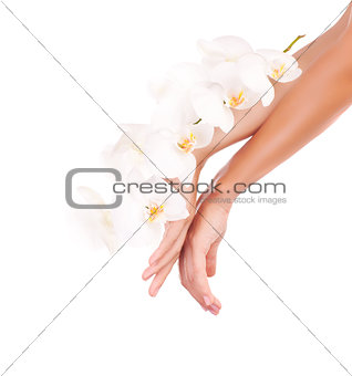 Female hands with orchid flowers