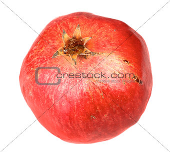 Single fresh red pomegranate