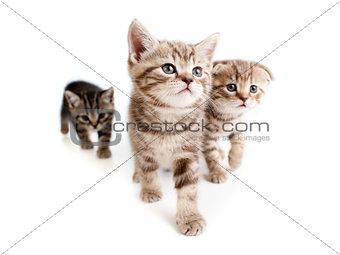 three kittens on white