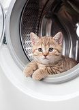 striped british kitten lying inside laundry washer