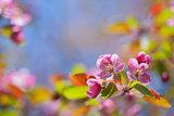 pink blossom branch macro shot