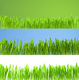 Set of clean growing fresh grass on white, blue and green backgr