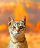 cat portrait over autumn colors background