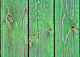 Old wooden boards painted in green. Background.