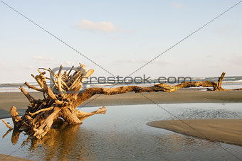 Driftwood Pointing Toward Ocean