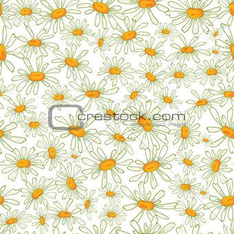 Camomile seamless pattern