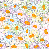 Camomile seamless pattern