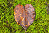 Heart Leaf