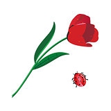 Vector illustration of red tulip and ladybug