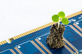 Little plant in electronic