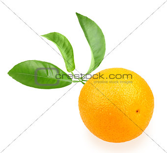 Orange and branch