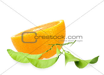 Halh of orange and branch