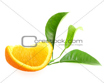 Part of orange and branch with green leaf