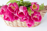Tulips in a wooden basket