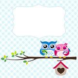 owl family spring