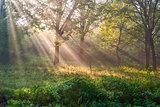 Sun rays in wood