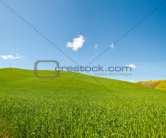 Mediterranean  Meadow