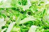 escarole endive