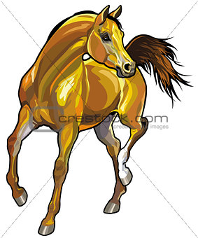 brown arabian horse