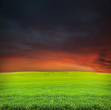 sunset and summer evening field