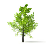green tree