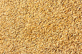 Jasmine rice seed texture