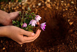 flower planting soil