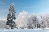 Urban winter landscape. Yaroslavl, Russia
