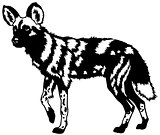african wild dog black white