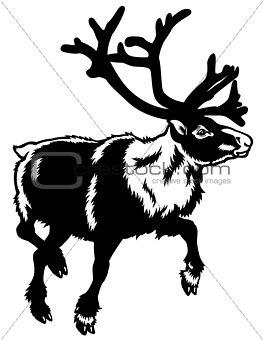 caribou black white