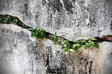 Cracked Wall with Little Plants Inside